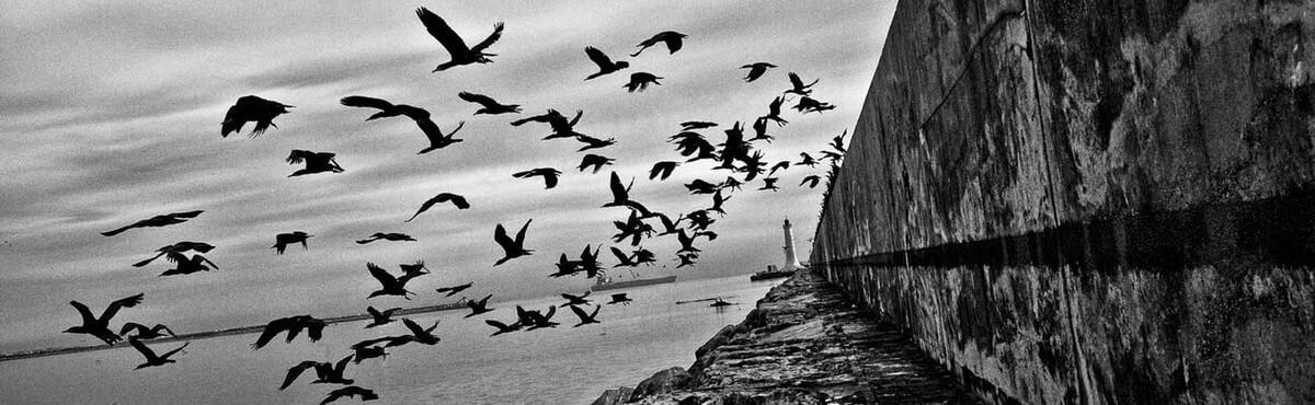 Het geheugen en de zee. La mémoire et la mer. Léo Ferré. Vivienne Stringa