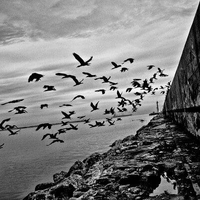 Léo Ferré - La mémoire et la mer. Het geheugen en de zee. Vertalingen Vivienne Stringa