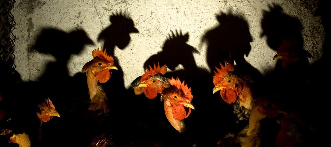 De kunst van het vertalen Elsa Triolet, Schaduwen, reflecties, toevalligheden, wonderen. Vertaling Vivienne Stringa.  L'art de traduire : ombres, reflets, coïncidences, miracles.