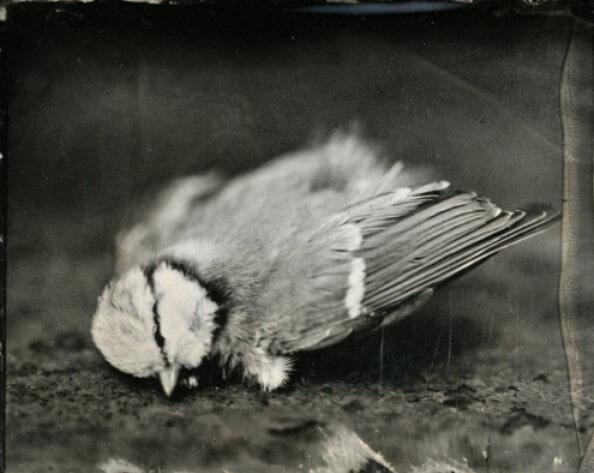 Vertalingen Charles Baudelaire aan Narcisse Ancelle. Poëzie. correspondentie,zelfmoord, gedichten, Les Fleurs du mal, vertaling Vivienne Stringa